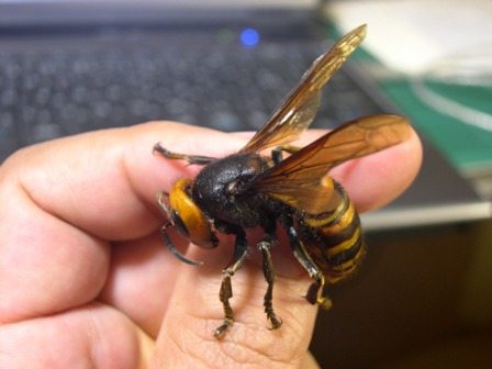 Paura delle vespe? Ecco il modo per non farsi pungere