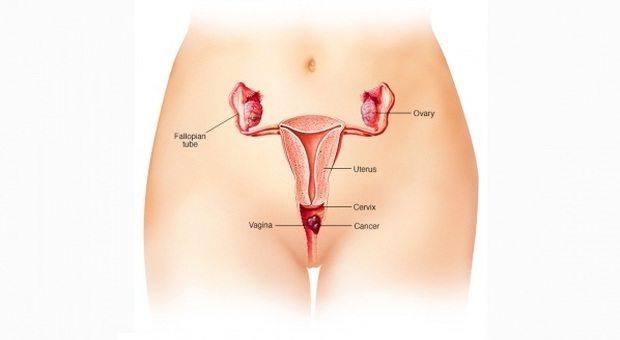 2201137_maschi_vagina